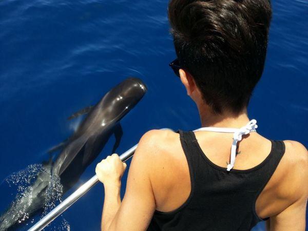 whale watching Tenerife
