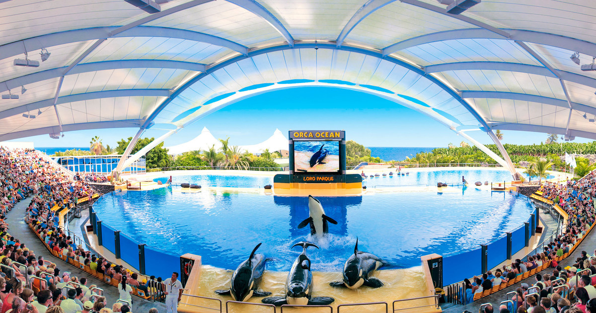 Image result for loro parque