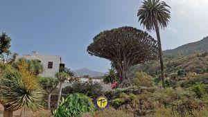 Excursión en Tenerife