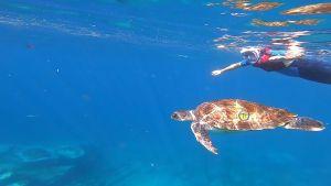 nurkowanie Teneryfa